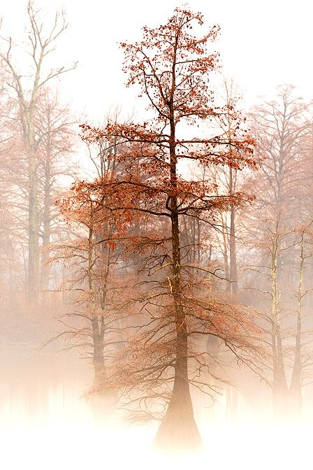 Autumn in the mist