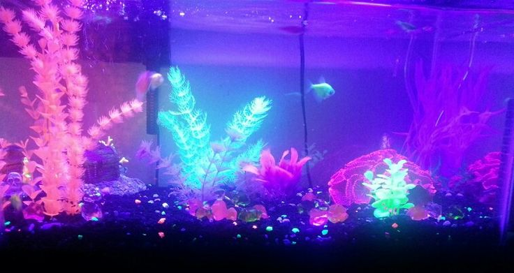 Pinterest the world s catalog of ideas for Glow in the dark fish tank