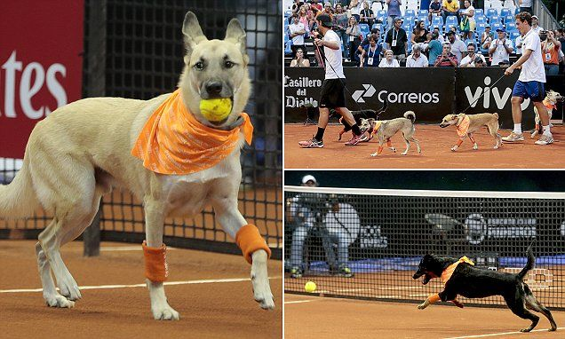 Shelter dogs take center stage at Brazil tennis open