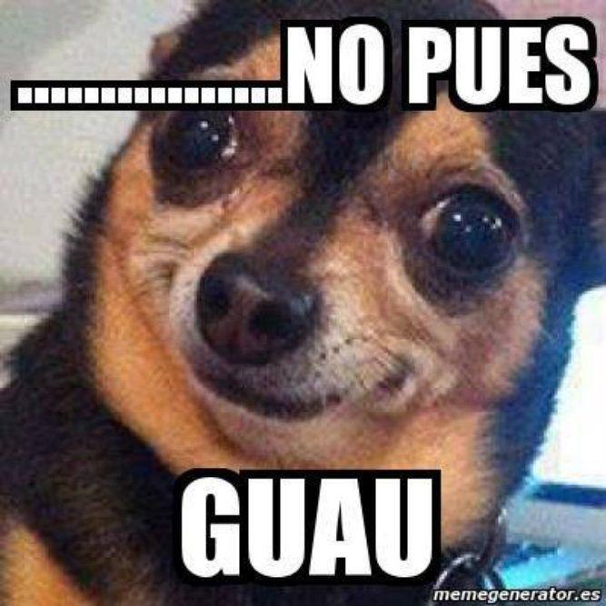 Chihuahua, Meme, Mexican Humor, Spanish.
