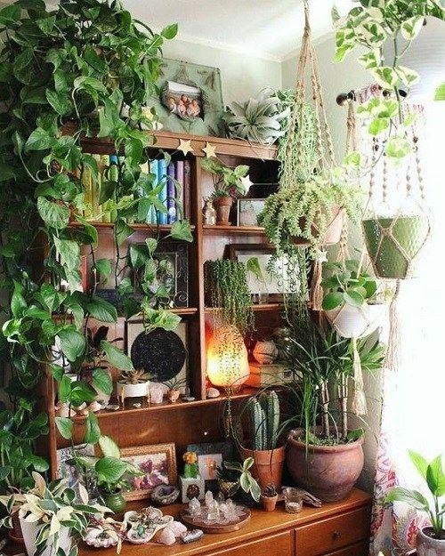 Piante da appartamento dal minimal all'urban jungle nel