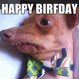 birthday dog meme pics