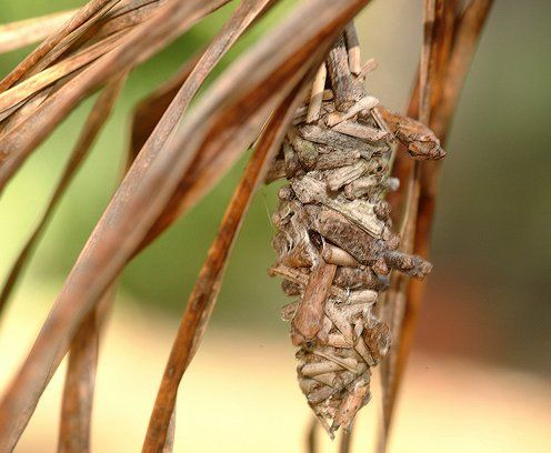 Web Worms, Bag Worms and Eastern Tent Caterpillars: What's the Difference? | Apartment Therapy