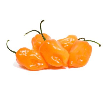 Habanero peppers, oh no, not for me! My husband will eat a whole one and I watch the steam come out of his ears! ;): Chile Habanero2, Pepper Seeds, 15 Seeds, Outdoors Hot Peppers, Habanero Peppers, Hot Sauces, Chile Peppers