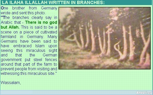 islamic miracles - Google Search