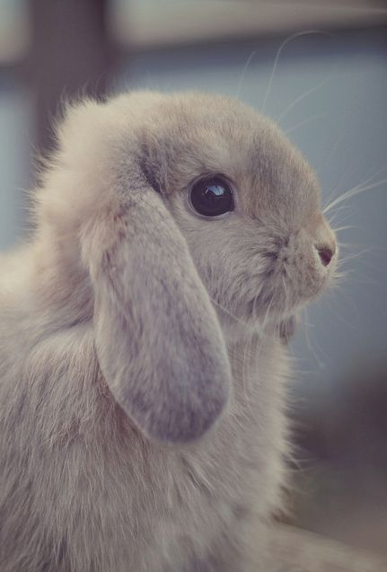 #bunny #cute My bunny was this small when I brought him home