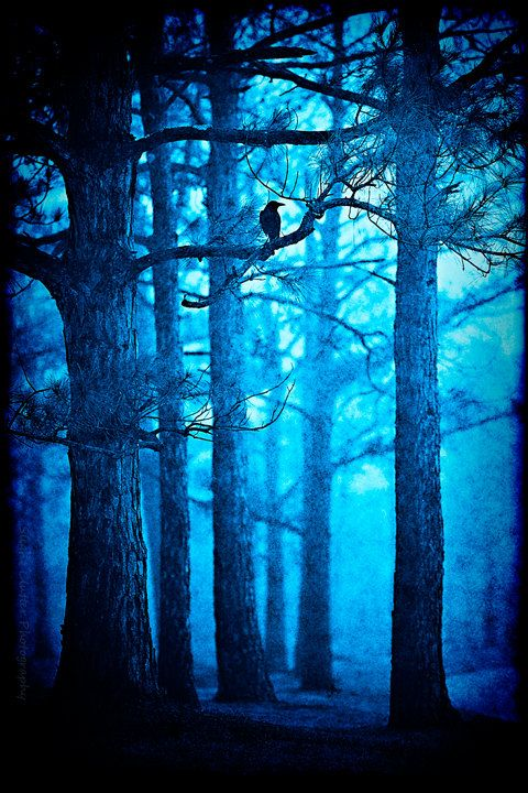 Fairytale+Photo++Enchanted+Forest+Photography++by+slightclutter                                                                                                                                                     More