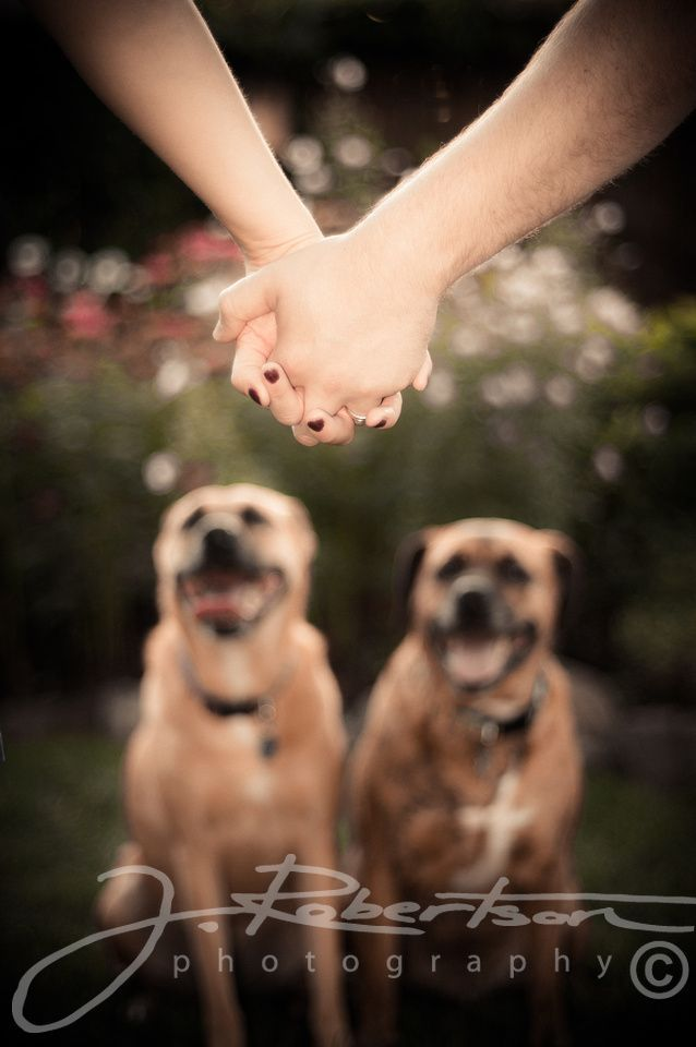 Outdoor, portrait, dogs, owners, holding hands