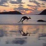 Cape Hillsborough Nature Resort, Australia