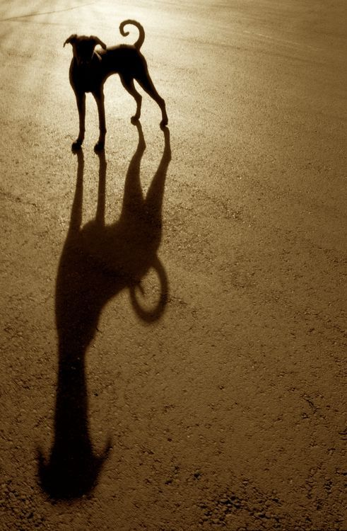 Pabloe's Shadow Photo by Verne Varona -- National Geographic Your Shot