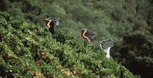 Die Douro-Region, einst nur für Portwein bekannt, hat sich in den vergangenen 10 Jahren in die Weltklasse für Rotwein heraufgearbeitet. Das hat sie hauptsächlich einer Boygroup zu verdanken.
