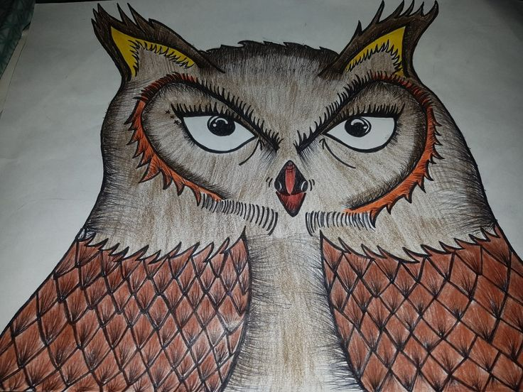 Owl drawing wise owl felt tip pencil art fin lines