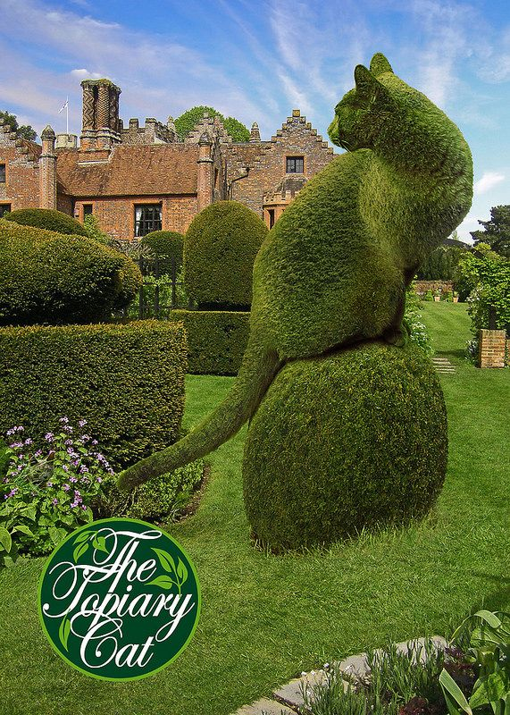 How absolutely cool is this! #cats #topiary #homeandgarden