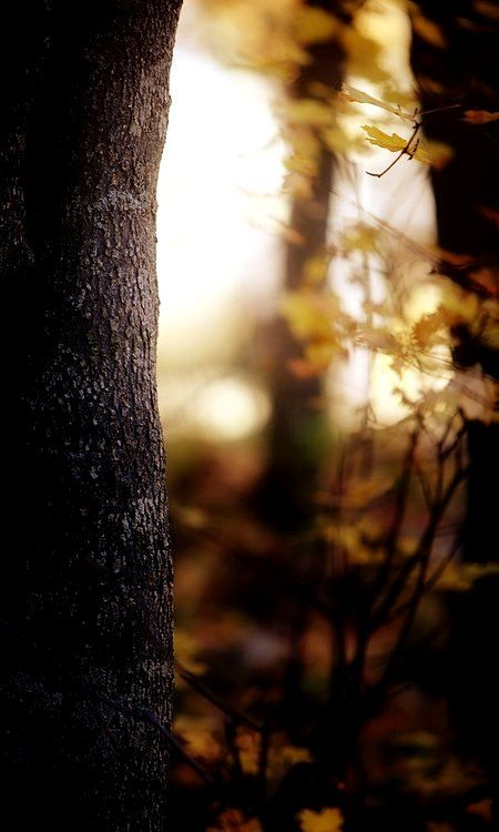 autumn forest...