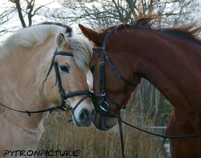 Verliefde paarden