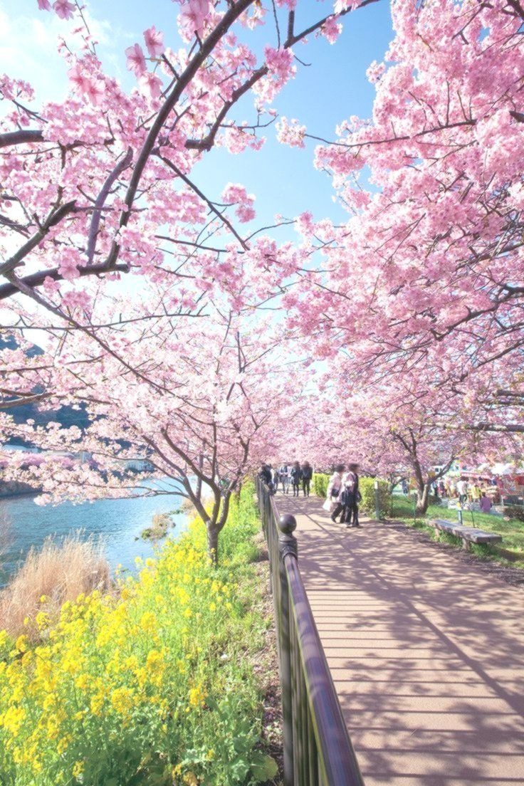 Pin By Tenko On Acnh Cherry Blossom Petals Blossom Trees Animal Crossing