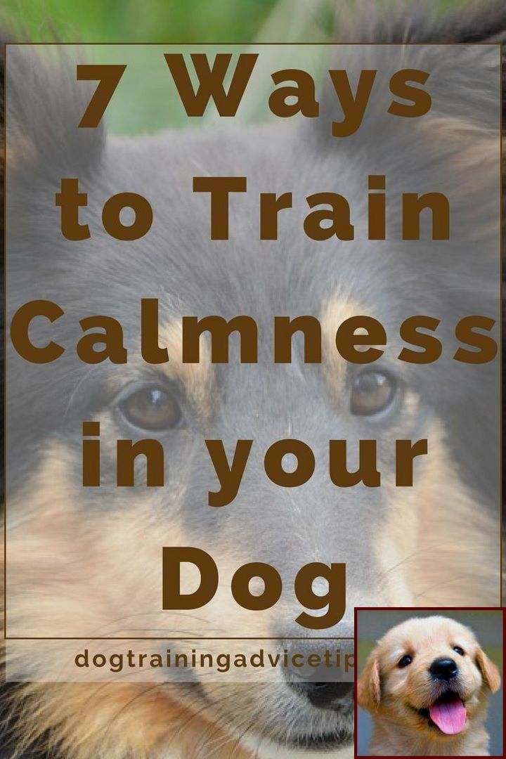 House Training A Young Puppy And Dog Training Courses Online Free
