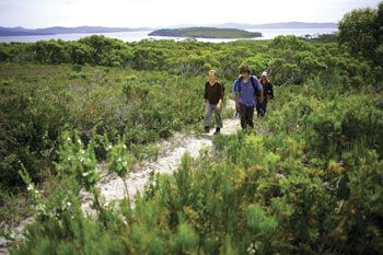 Bushwalking on Bruny Island