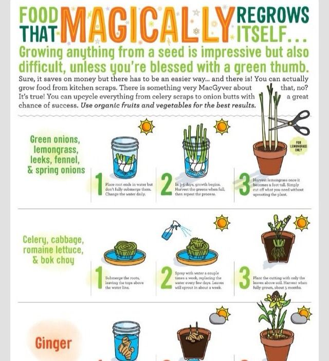 16 Foods That Will Re Grow From Kitchen Scraps: ️Food That Magically Re Grows Itself ️ #Home #Garden