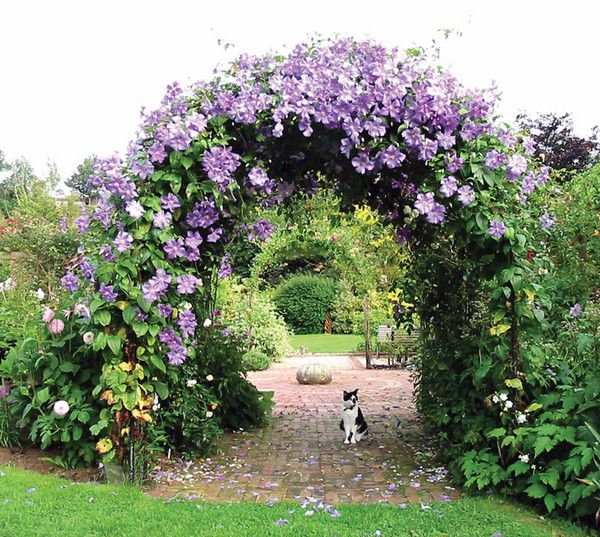 Garden Design Arches best 25+ garden arch trellis ideas on pinterest | garden arches