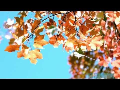 Autumn Leaves Slow Motion 2014