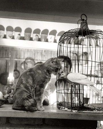 images Robert Doisneau - Google Search