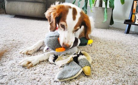 7 Pet Products That Can Harm Your Pet