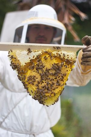 An article on yours truly about urban beekeeping in San Diego. San Diego City Beat.