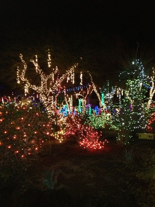 51 best the holidays images on pinterest merry christmas - Ethel m cactus garden christmas 2017 ...