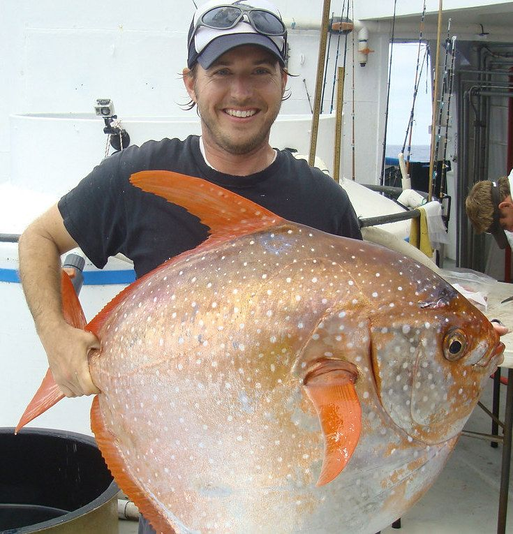 Throw Out All Your Textbooks, There's A Warm-Blooded Fish