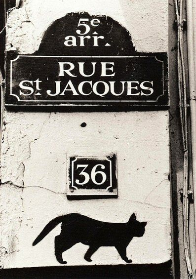 Le chat noir de la rue Saint-Jacques...  (Paris 5ème)