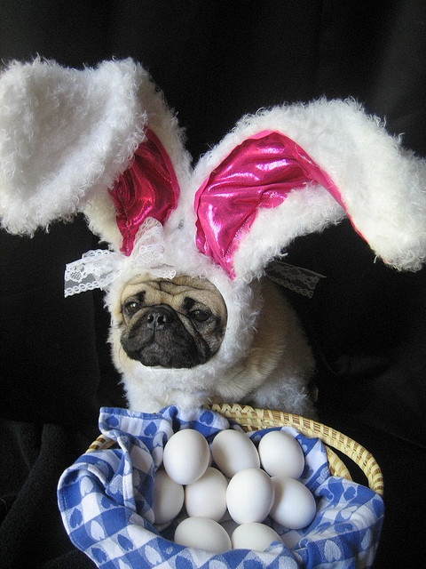 Easter Bunny cuteness for mom.