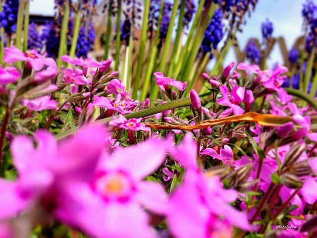 garden-kvety