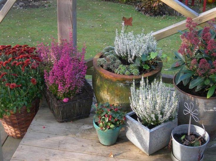 déco d'automne pour le porche - des arrangements de bruyère erica en lilas et blanc et chrysanthèmes rouges