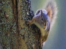 Wallpaper Facebook Cover Squirrel On Tree