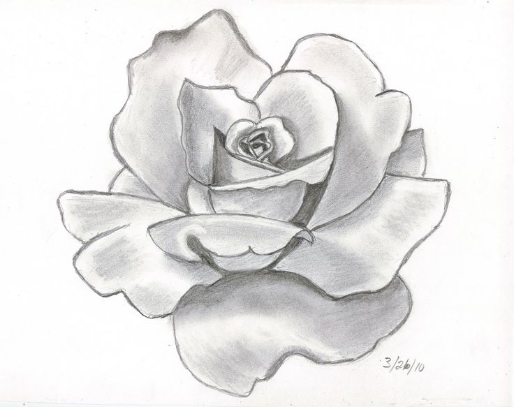 Pencil Drawings Of A Flower