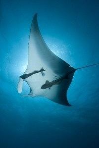 Sipadan Dive Resort, Malaysia