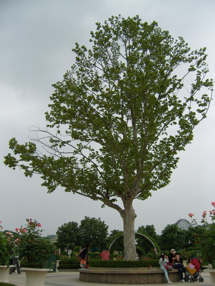 Cloudy, tree
