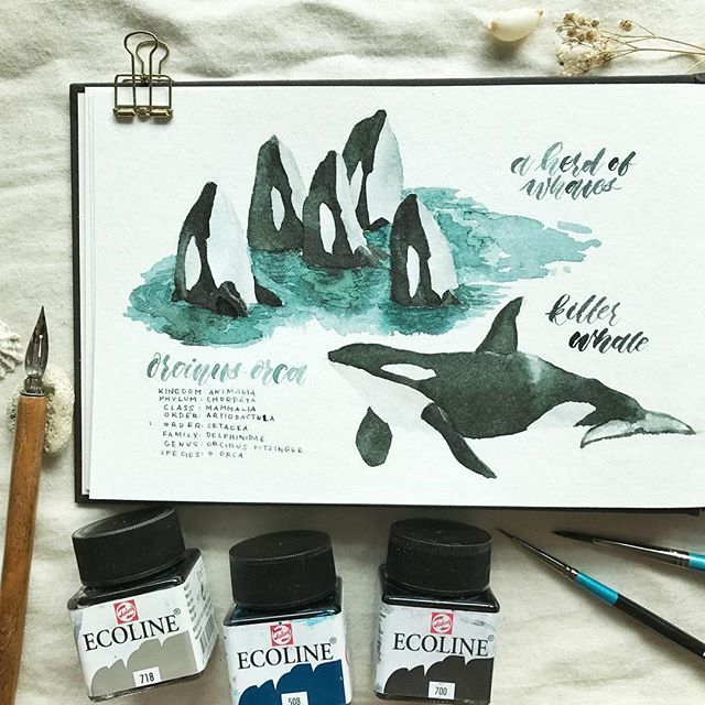 a herd of whales / @theletteringtribe /  #juneanimalgroups 🤷🏻♀️fun fact about killer whales: a killer whale isn't actually a whale🐳- it's a dolphin 🐬and currently the largest species there is!   when you can't afford an actual pen rest because all the other art materials are expensive so you use an actual pebble from the beaches of western australia as a pen rest 🙃 ------------------------------------------ 📜strathmore watercolour journal 🎨ecoline 🖌daler rowney aquafine round…
