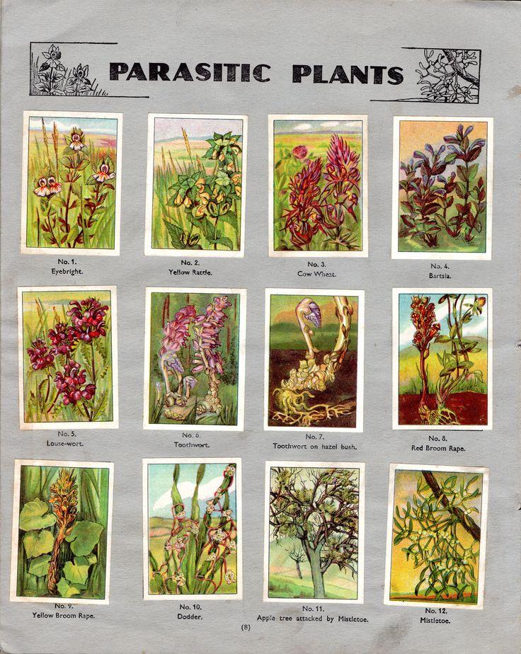 NESTLE': Wonders of the World (1932 - Parasitic Plants)