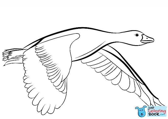 Goose Flying Coloring Page Free Printable Coloring Pages Intended