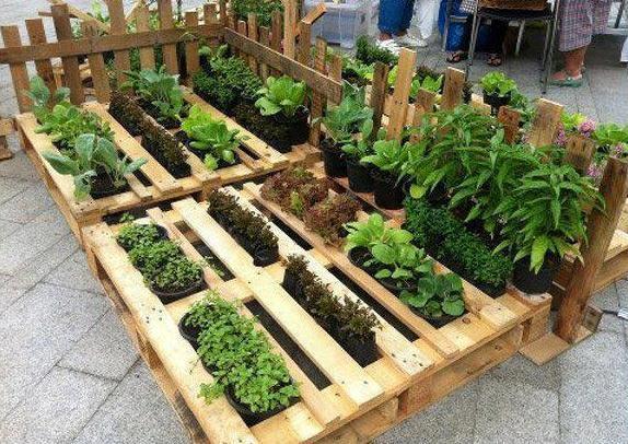 Horta feita em paletes de madeira