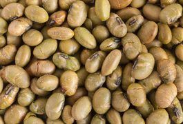 Roasted soybeans are a crunchy snack that's actually good for you. Soybeans are the only plant food that contains a complete protein. In other words, they contain all the essential amino acids necessary for human health. In fact, the amino acid profile of soy is very close to that of animal products like meat, eggs and milk. Roasted soybeans can be...