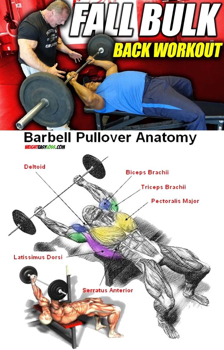 COMPLEX BACK WORKOUT TUTORIAL 👇 Barbell workout, Back