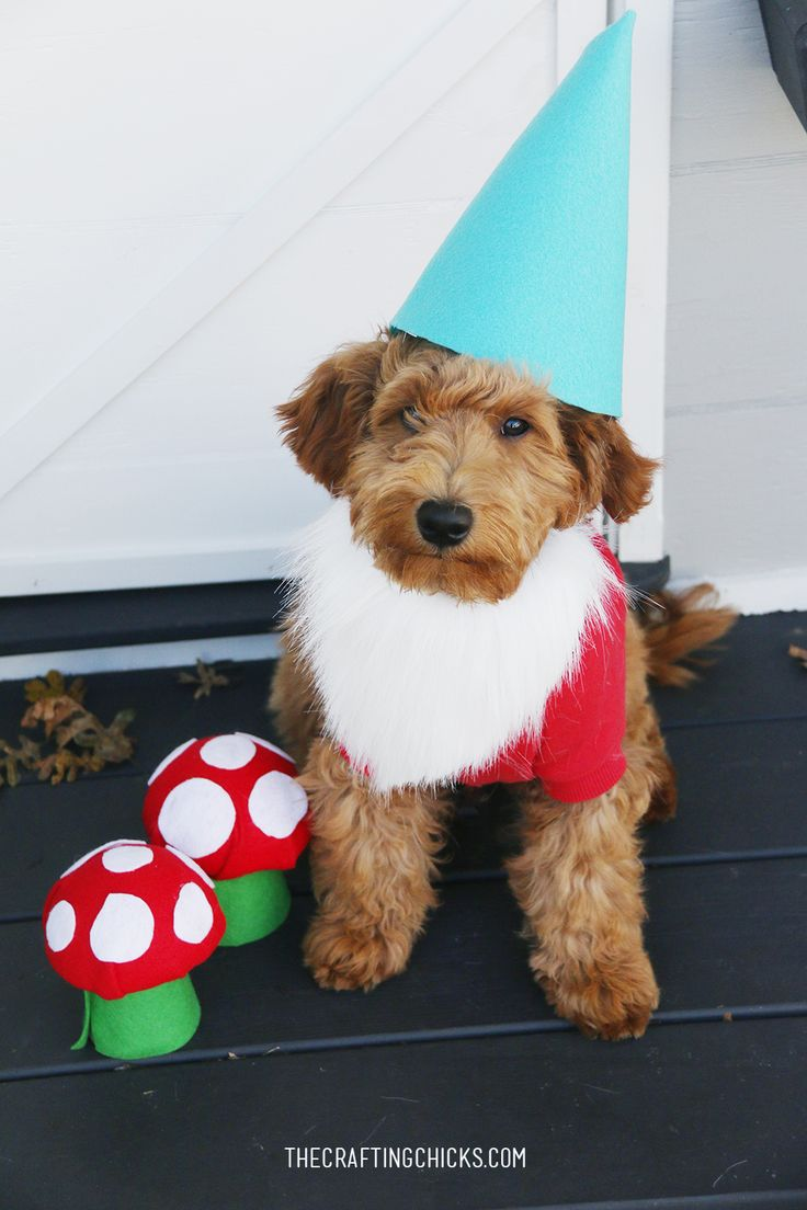 25+ best Dog costumes ideas on Pinterest