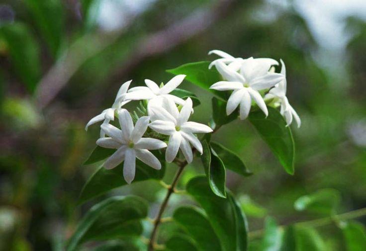 Vieni, guarda i veri fiori di questo mondo doloroso (Matsuo Basho)