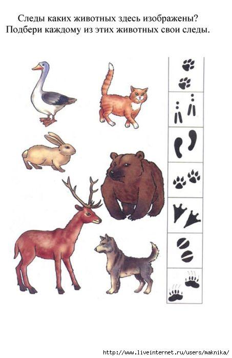Zoek de juiste voetafdruk bij het dier