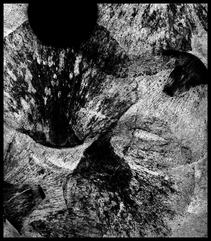 Eva Holmstedt Photogram