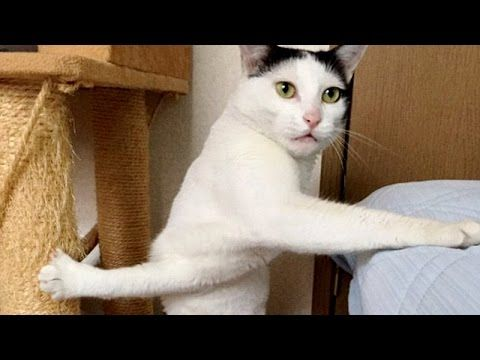 Cats are so funny you just can't stop laughing - Funny cat compilation - YouTube