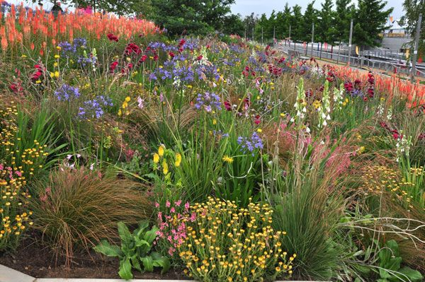 James Hitchmough's South African Meadow Style Comes to Wisley | Pro Landscaper - The industry's number 1 news source